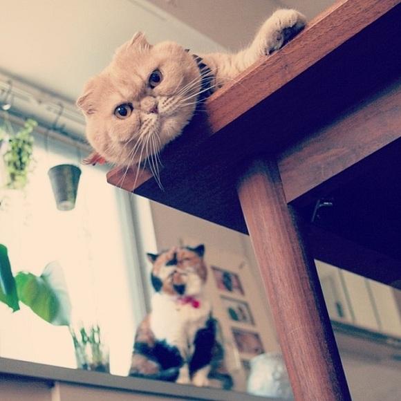 Làm quen bộ ba chú mèo nghiêm túc khiến Facebook dậy sóng